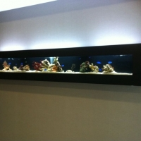 201108301609200.Wall mount Fish Tank - Marine Fish - Copy